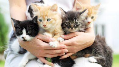 Kediler Sahiplerini Anlayabilir Mi?