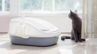 Kedilerde Tuvalet Eğitimi Süreci (Tüm Süreç Detayları)