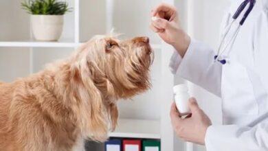Köpeklerde Deri Döküntüleri ve Alerji Problemleri