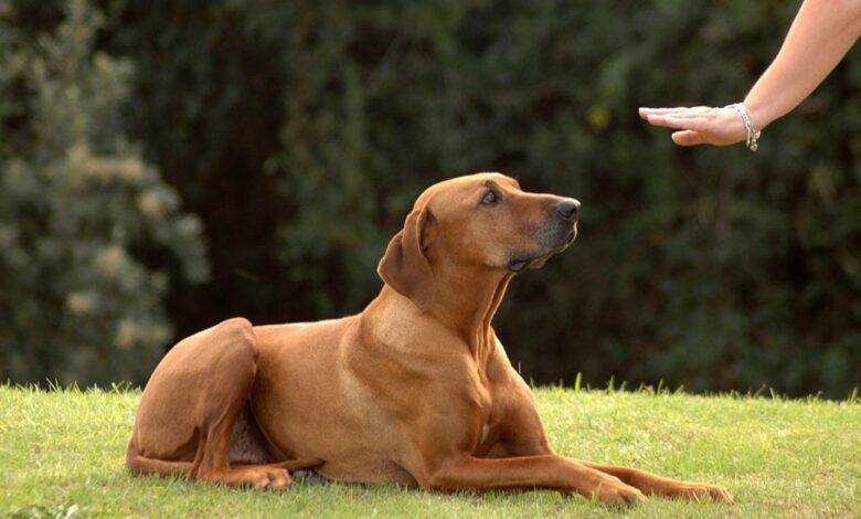 Köpekler Dakikada Kaç Nefes Alır?
