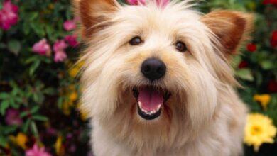 Köpeklere B Vitamini Nasıl Verilir?