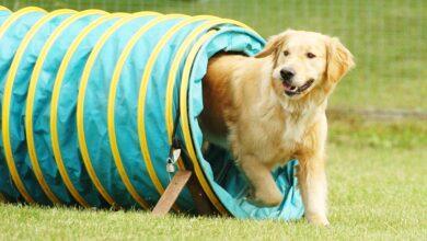 Köpek Eğitim Ürünleri