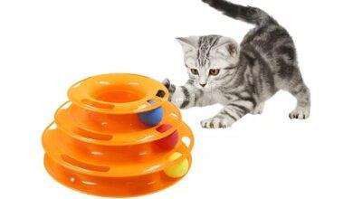 Kedi Eğitim Ürünleri