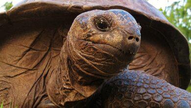 Kaplumbağalarda Göz İltihaplanması