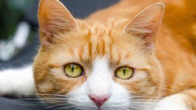 Kedilerden İnsanlara Geçen Hastalık Var Mıdır?