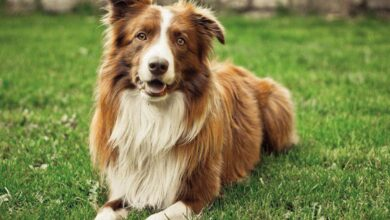 Köpek Irklarında Kalıtsal Hastalıklar Nelerdir?