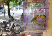 Kuş Kafesi Bakımı