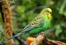 Kuşların Türlerine Göre Kullanılması Gereken Yemler