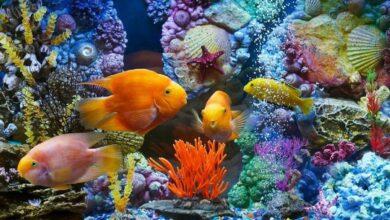Akvaryum Balıklarının Hastalıkları