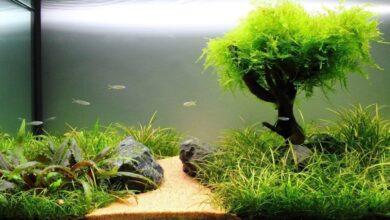 Akvaryum İçin Canlı Bitkiler
