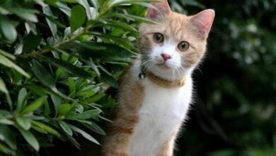 Kediler İçin Tehlikeli Bitkiler