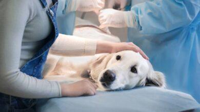 Hangi Köpek Türlerinin Genetik Rahatsızlıkları Vardır?
