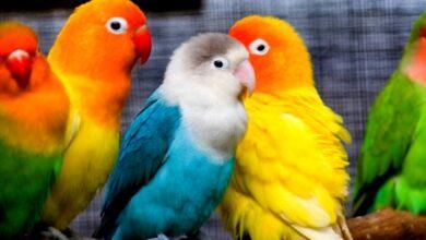 Kuşlarda Kasılma Neden Olur?