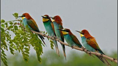 Türkiye'de Bulunan Kuşların Türleri Nelerdir?