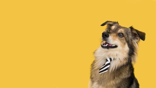 Köpeklerde Göz İltihaplanması