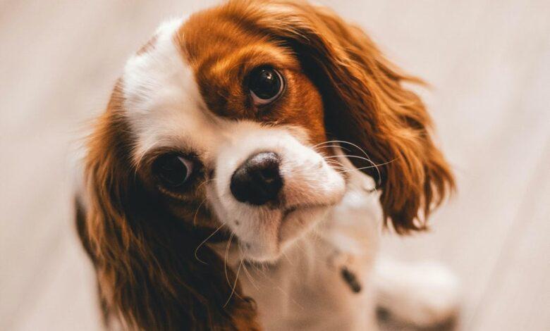 Köpeklerin Burnu Neden Islaktır?