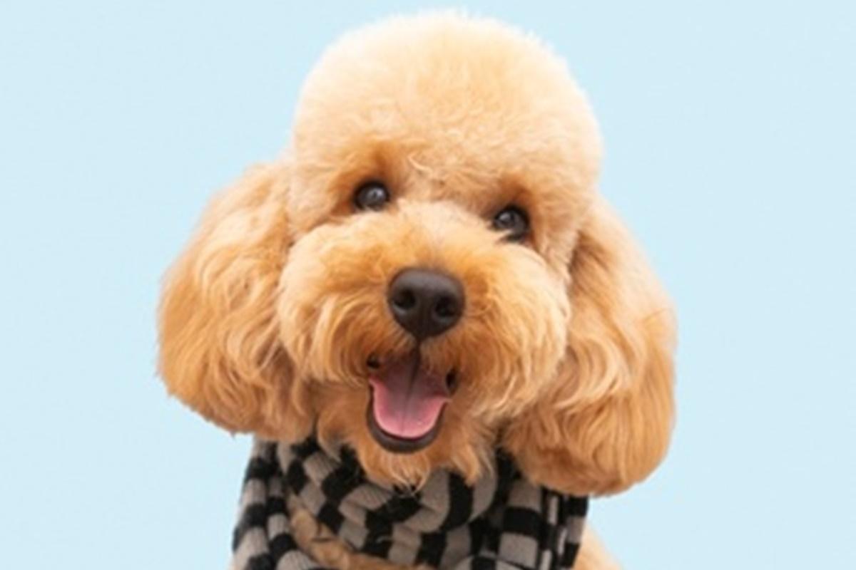 Köpeklerde Kızgınlık Döneminde Ne Yapılmalıdır?