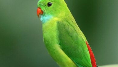 Muhabbet Kuşlarında Sindirilmemiş Besin Nedenleri