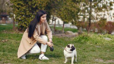 Köpeklerde Tam Kan Tahlili Ne Zaman Gereklidir?