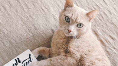Kedilerde Gözlerde Sulanma ve Burun Akıntısı