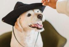 Köpeklerde Gözlerde Sulanma ve Burun Akıntısı